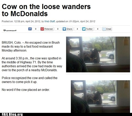 Cow On The Loose Wanders To McDonalds